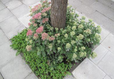 #46 Un permis de planter dans l'espace public